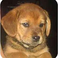 Adopt A Pet :: Vlasic - Novi, MI