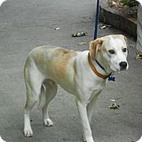 Adopt A Pet :: CLAYTON - Raleigh, NC
