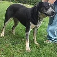 Adopt A Pet :: sissy - Prestonsburg, KY