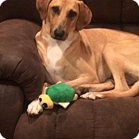 Adopt A Pet :: Toulah in CT - East Hartford, CT