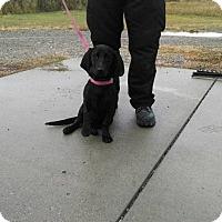 Adopt A Pet :: daphne - Ogden, UT