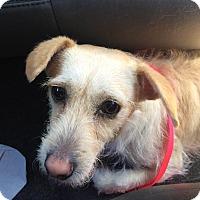 Adopt A Pet :: John - Encino, CA