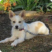 Adopt A Pet :: PRINCESS - Hartford, CT