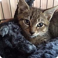 Adopt A Pet :: Kylo - Devon, PA