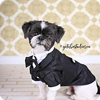 Adopt A Pet :: Gizmo 3201 - Toronto, ON