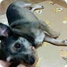 Adopt A Pet :: Shinee