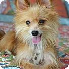 Adopt A Pet :: Kip
