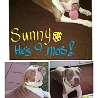 Adopt A Pet :: Sunny - Courtesy Post - Beverly Hills, CA