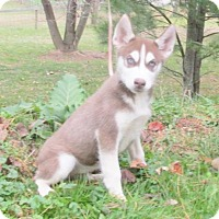 Adopt A Pet :: YORK - WOODSFIELD, OH