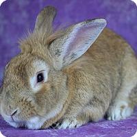 Adopt A Pet :: Fez - Wilmington, NC