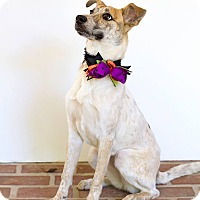 Adopt A Pet :: Willow - Baton Rouge, LA