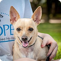Adopt A Pet :: CeCe - Houston, TX