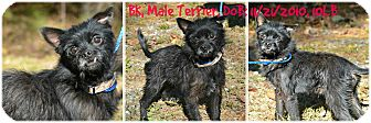 Terrier (Unknown Type, Small) Mix Dog for adoption in Siler City, North Carolina - BK