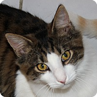 Adopt A Pet :: Zach - Fairfax, VA