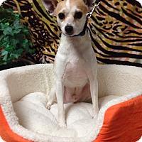 Adopt A Pet :: Kelton - Tehachapi, CA