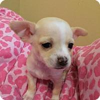 Adopt A Pet :: Majesty - Bakersfield, CA