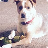 Adopt A Pet :: Ozzy - Van Nuys, CA