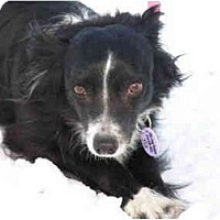 Adopt A Pet :: Lina - Rigaud, QC