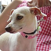 Adopt A Pet :: Molly - Long Beach, CA