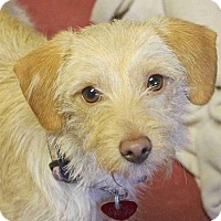 Adopt A Pet :: Sandy - Winters, CA