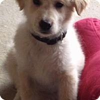 Adopt A Pet :: Moose - Saskatoon, SK