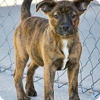Adopt A Pet :: Anna & Elsa - Sneads Ferry, NC