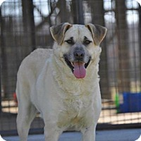 Adopt A Pet :: Riley - Pocahontas, AR