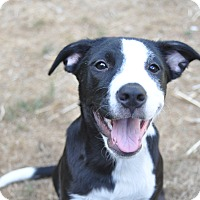 Adopt A Pet :: Thelma - Tumwater, WA
