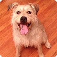 Adopt A Pet :: SLIPPER - CHICAGO, IL