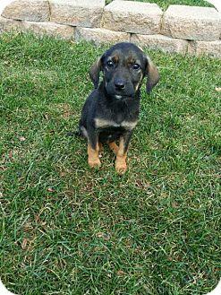 Dog Rescue Orland Park Il