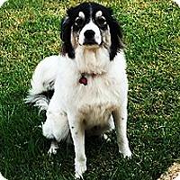 Adopt A Pet :: Holly Jolly - Kyle, TX