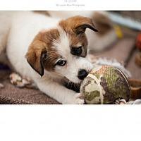 Adopt A Pet :: puppy 1 - Edmond, OK