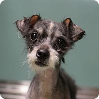 Adopt A Pet :: Sparky - Bernardston, MA
