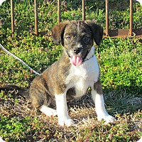 Adopt A Pet :: SELA - Bedminster, NJ