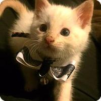 Adopt A Pet :: Timon - Austin, TX