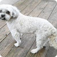 Adopt A Pet :: Parker - Umatilla, FL