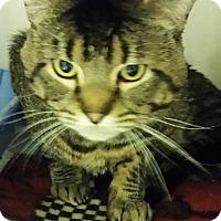 Adopt A Pet :: Sergio - Muskegon, MI