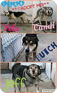 Husky Mix Dog for adoption in North Pole, Alaska - Butch