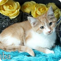 Adopt A Pet :: Simba Female - knoxville, TN