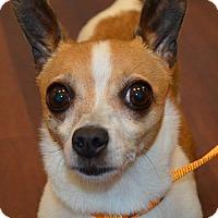 Adopt A Pet :: Sparkle - Mt. Prospect, IL