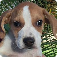Adopt A Pet :: Grandview#5F - Orlando, FL