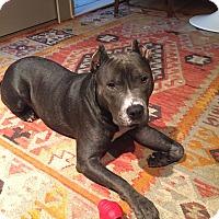 Adopt A Pet :: Willis - Huntsville, AL