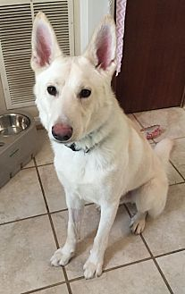 Shepherd (Unknown Type) Dog for adoption in Fredericksburg, Virginia - Seymour- Courtesy Listing