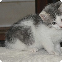 Adopt A Pet :: Costello - Winchester, KY