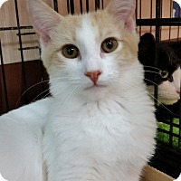 Adopt A Pet :: Carson (KV) - Little Falls, NJ