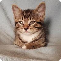 Adopt A Pet :: Butterscotch - Templeton, MA
