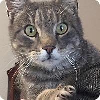 Adopt A Pet :: Kindle - Divide, CO