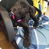 Adopt A Pet :: Winnie - Santa Rosa, CA