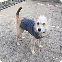 Adopt A Pet :: Gypsy - New Oxford, PA