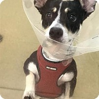 Adopt A Pet :: Tubby - Miami, FL